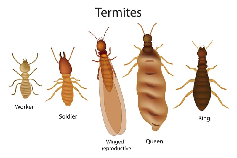 This image has an empty alt attribute; its file name is Termite2.jpg
